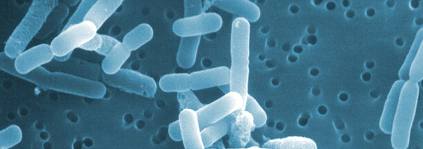 research_lactobacillus