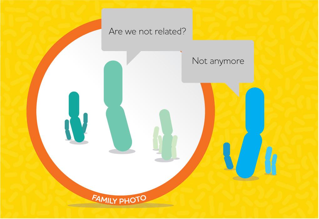 Lactobacillus family