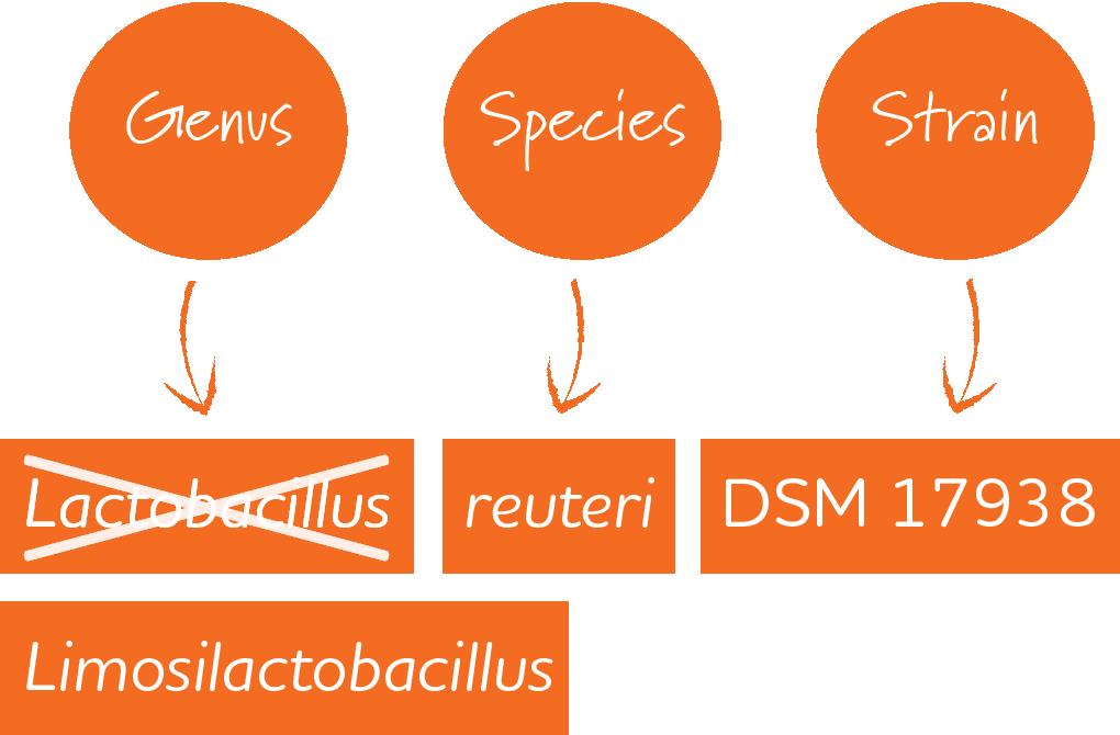 Lactobacillus Taxonomy Change